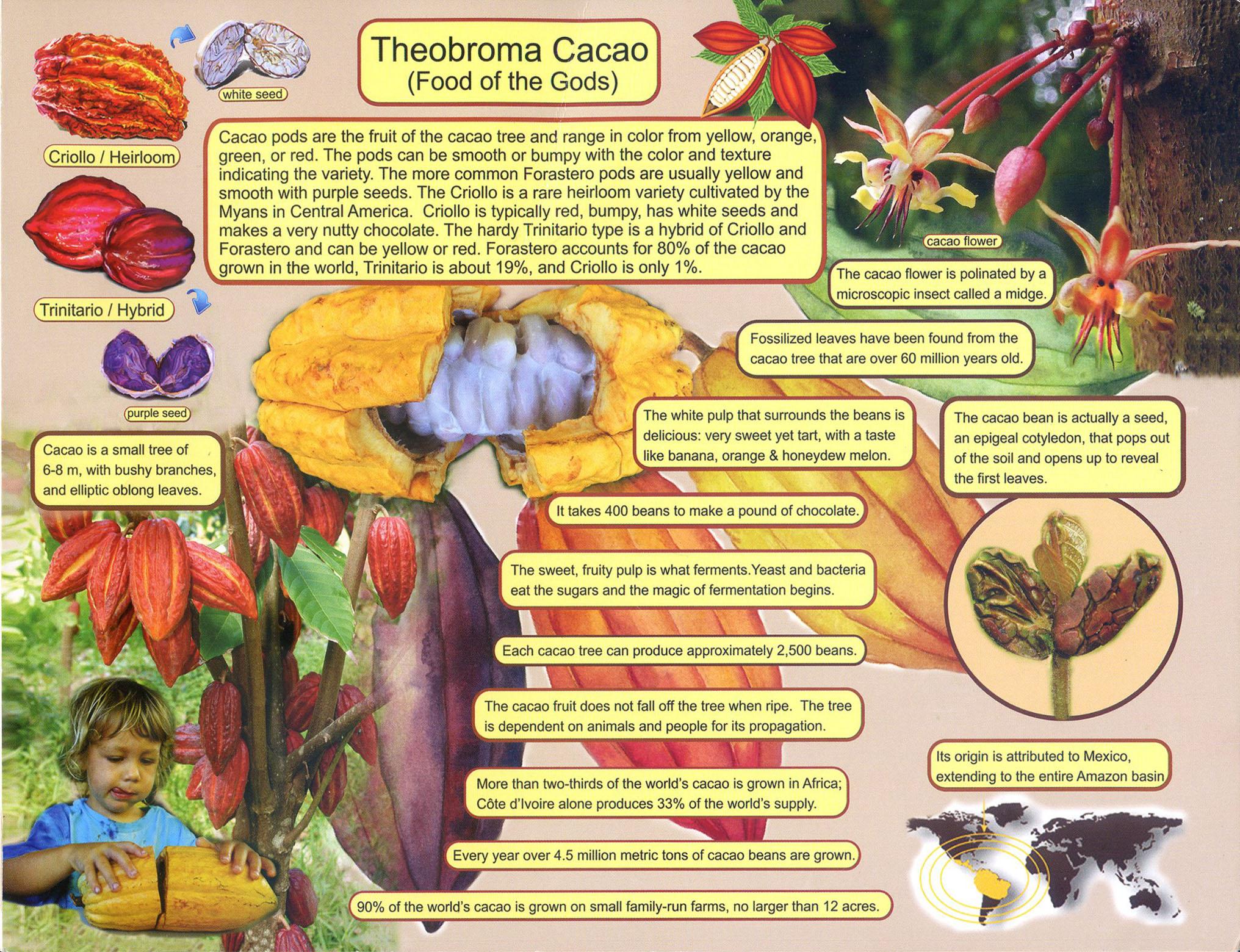 choco brochure side-a